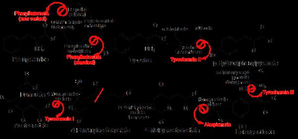 Pathophysiology_of_metabolic_disorders_of_phenylalanine_and_tyrosine tyrosinemia types I II III 123
